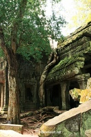20080812_1393a_Angkor_TaProhm_07_w
