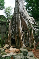 20080812_1403a_Angkor_TaProhm_10_w