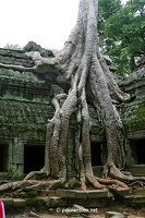 20080812_1410a_Angkor_TaProhm_13_w